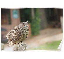 Eurasian Eagle Owl - Parc Omega Poster