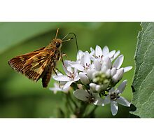 Sipping Skipper Photographic Print