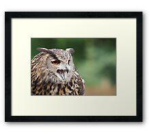 Eurasian Eagle Owl - Parc Omega - Canada Framed Print