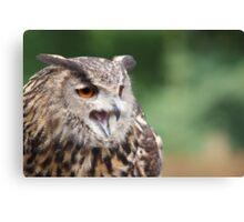 Eurasian Eagle Owl - Parc Omega - Canada Canvas Print