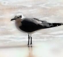 Seabird-Jacksonville Beach, Florida by kathyrussell56