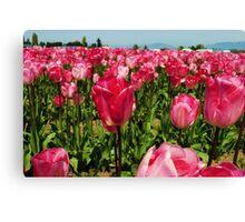 Tulip Time 2 Canvas Print