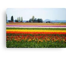 Tulip Time 7 Canvas Print