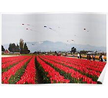 Tulip Time 9 Poster