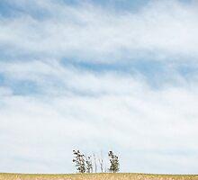 Sleeping Bear Dunes by William  Goldsmith