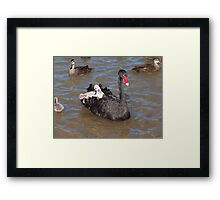 Let's jump out while she's not looking !!! Framed Print