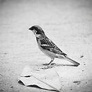 A Little Birdie Told Me by Eric Scott Birdwhistell
