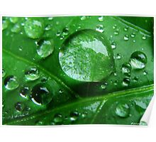 Water Drop Magnifier Poster