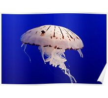 Funky Jellyfish Poster