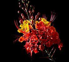 Orange Bloom by Glennis  Siverson