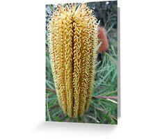 Symmetry, Bottlebrush, Lane Cove National Park, Sydney, Australia. Greeting Card