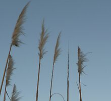 Feather: Maribyrnong River by Sally Kate Yeoman