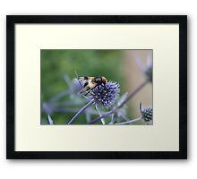 Thistle for Lunch! Framed Print