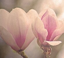 Magnolias for Sheila by Gregoria  Gregoriou Crowe