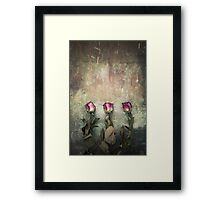 Three dried roses Framed Print