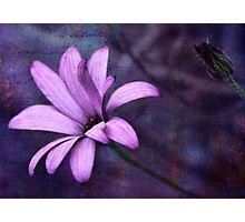 Study in Purple Photographic Print