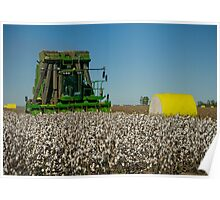 Cotton Harvest Poster