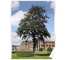 The Tree at Witley Court Poster