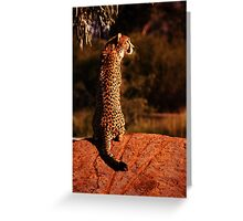 Lonely Hunter Greeting Card