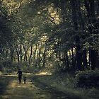 Along Unfamiliar Paths 2 by reindeer