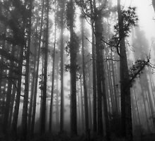 Foggy Trees - Mt Stromlo, Canberra by Troy Barrett