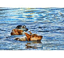 KOOLIE COOL OFF Photographic Print