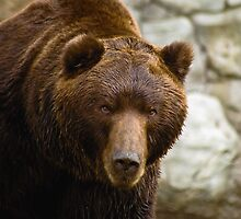 Furry Brown Bear