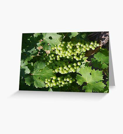 Vineyard grapes Greeting Card