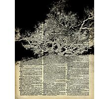 White And Bloack Lonley Tree Dictionary Art Photographic Print