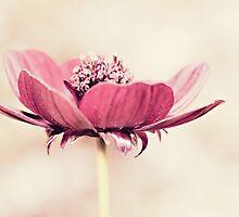 La vie en rose by Anne Staub by Anne Staub