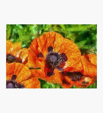 Flower - Poppy - Orange Poppies  Photographic Print