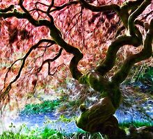 Acer Abstract by Susie Peek