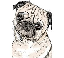 Cute Pug Drawing in Colour Photographic Print