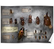 Bug Collector - The insect Collection  Poster