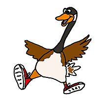 Silly Goose with Red Sneakers Photographic Print
