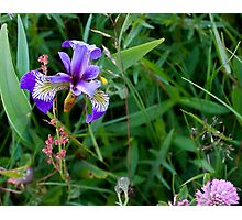 Cape Spear Wildflowers Photographic Print
