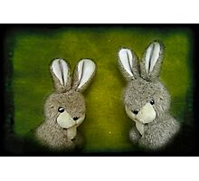Two Bunnies Photographic Print