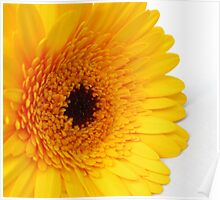 Single Yellow Gerbera Poster