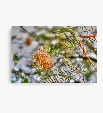 Bottle Brush Flower (2) Canvas Print
