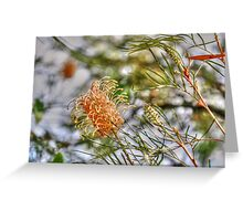 Bottle Brush Flower (2) Greeting Card