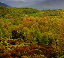 View from the Queen Elisabeth Forest park, Scotland by Gabor Pozsgai