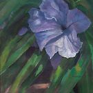 Mexican Petunia by jimmie