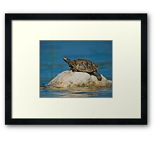 Northern Map Turtle Framed Print
