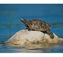 Northern Map Turtle Photographic Print