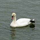 Swan by Mikhail Krupenin