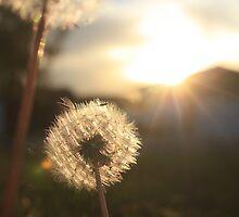 Sunset Dandelions by EyelightsPhoto