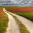 Clover fields at Balranald Nature Reserve, Scotland by Gabor Pozsgai