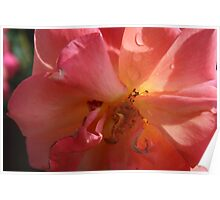 A PINK ROSE JUST FOR YOU  Poster