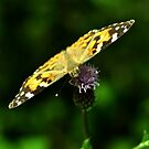 Painted Lady by Russell Couch