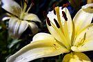 Nature's Jewels by Rhonda Blais
